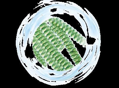 Aktivní dermořasa Spirulina